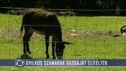 Elítélték a gyilkos szamarak gazdáját