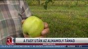 A fagy után az almamoly támad