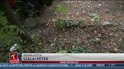 Őszi vihar: faágak zuhantak autókra