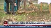 Dana és Dária, az igazi vadmacskák