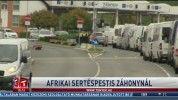 Afrikai sertéspestis Záhonynál