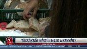 Tücsökből készül majd a kenyér?