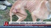 Lopással vádolják az állatmentőket