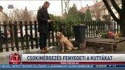 Csokimérgezés fenyegeti a kutyákat