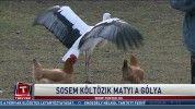 Sosem költözik Matyi, a gólya