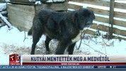 Kutyái mentették meg a medvétől