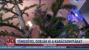 Tömegével dobják ki a karácsonyfákat